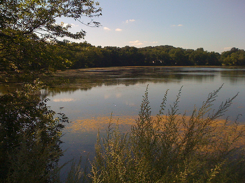 Walks at Arlington Reservoir helped spark