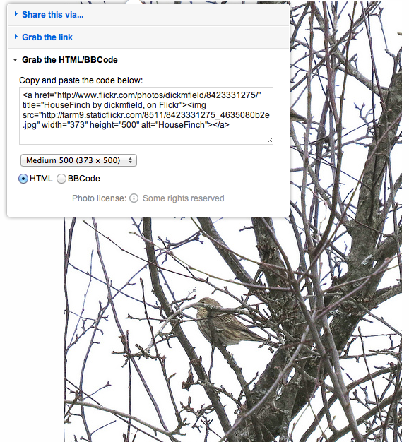 """How to embed photos from Flickr. Click the share icon at the top of the photo and you get a drop-down menu. Select the """"Grab the HTML/BBCode"""" option and then click to select that text block. This is what you will paste in your eBird species comments."""