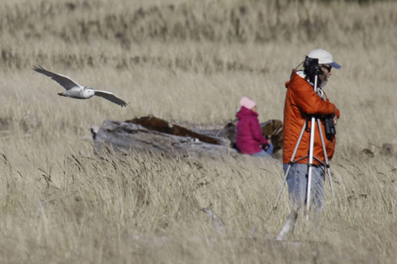 Notice the fine winter plumage of this pair.  Facial hair is usually a reliable field mark which can be used to sex birders in the field during the winter season.  The birder on the right foreground is a male and the other is presumably his mate.