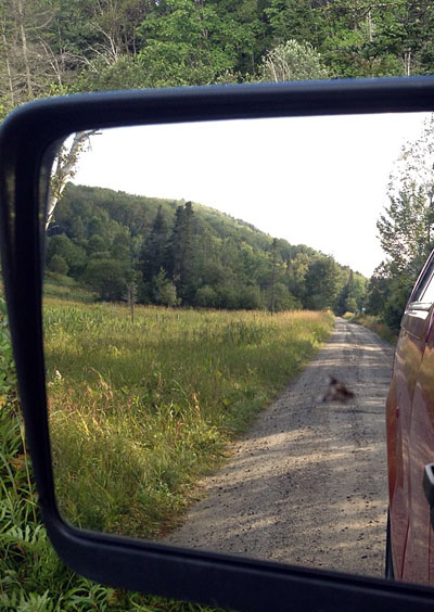 This deer fly road all the way in on the side mirror - I probably should have taken that as a sign of the travails ahead.