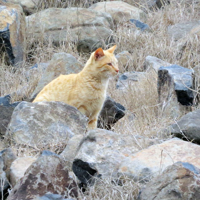 Feral cats are everywhere in Texas -- and while pretty, are quite devastating to the bird population.