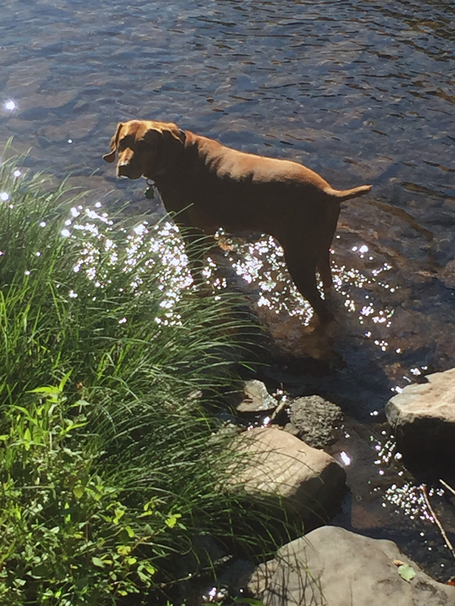Penny enjoying the river