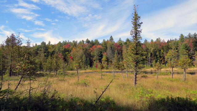 The bog was beautiful with fall colors starting, no bugs, no noise, no people - just a guy and a dog.