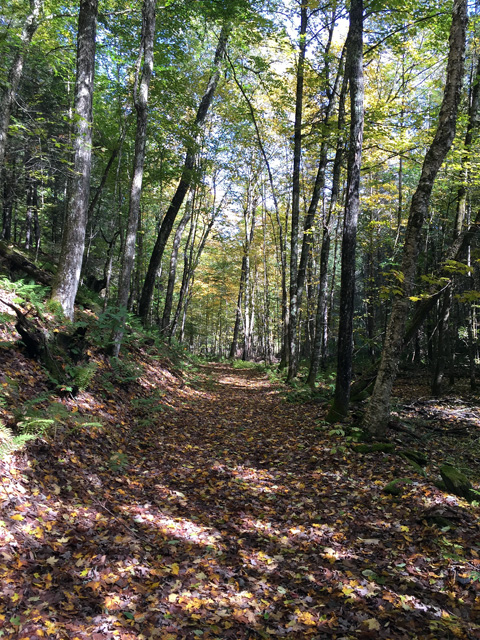 The trail is on private land at the start and also follows a snowmobile track. It's easy walking with some debris from falling trees.
