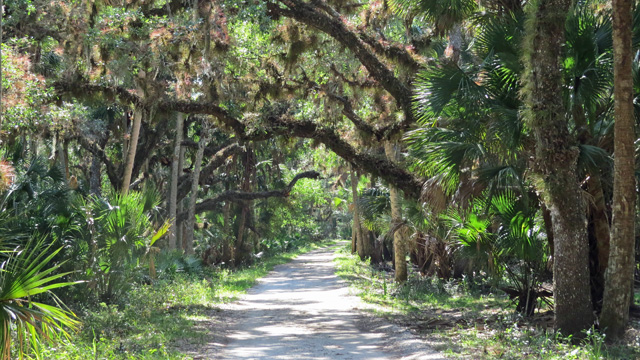 There are many trails where in addition to birds, you might see opossum, alligators, raccoons, and plenty of squirrels.